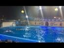 Архипо-Осиповка дельфинарий
