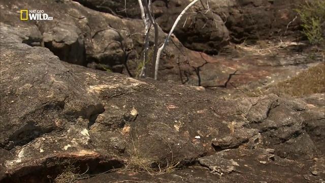 Дикая Австралия с Рэем Мирсом 2 серия. Болота / Wild Australia with Ray Mears (2016)