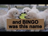 Bingo Dog Song B.I.N.G.O Kids Songs &amp Nursery Rhymes Family fun playtime