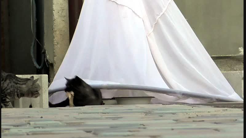 Ловля кошек падающим сачком