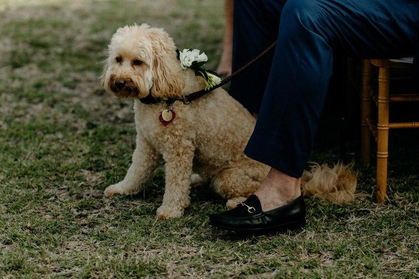 AIEBlT1743g - Как угодить всем гостям на свадьбе