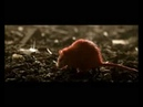 Rain Catchers Снова один Новый дебютный клип