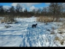 Зимняя прогулка мы встретили БОЛЬШУЮ ворону