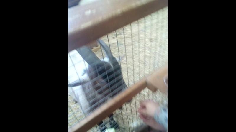 мы с Настей в контактном зоопарке смотреть онлайн без регистрации