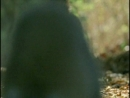 18. Кошачий лемур Лаура