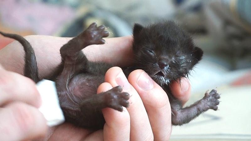 Спасение новорожденного котенка   Saving the newborn kitten / SANI vlog