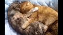 Cute Cat Mom Hugs Kitten Maru♡子猫のまるを抱きしめるかわいい猫のお母さん