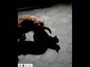 пёс зоофил