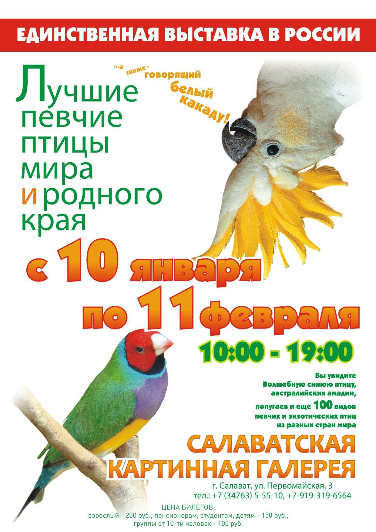 C 10 января по 11 февраля в галерее, по улице Первомайская,3 работает единственная в России выставка (Лучшие певчие птицы мира и родного края ).