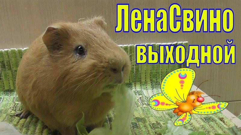 ЛеноСвиновыходной/бездомные кошки/зима надоела/Елена и зверята