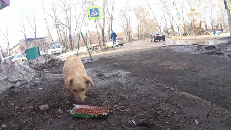 Накормили собак