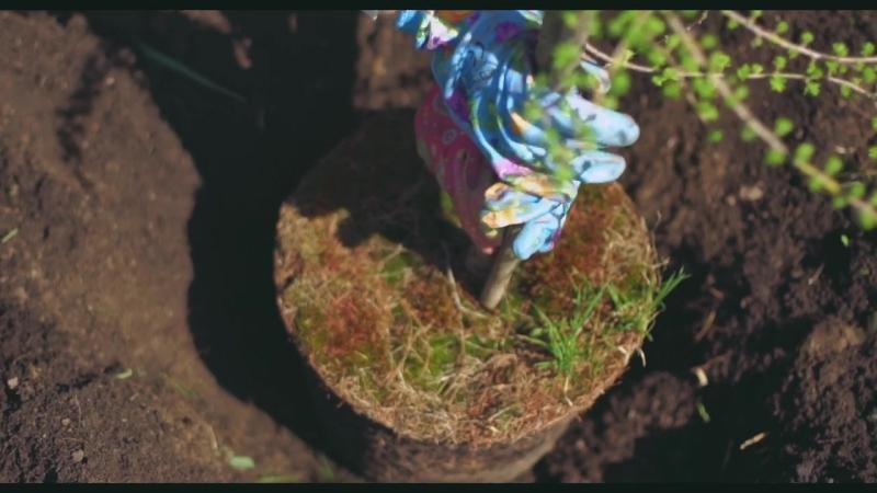 Весеннее семейное видео в саду » Freewka.com - Смотреть онлайн в хорощем качестве