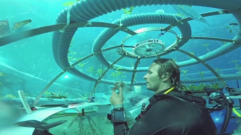 Подводные фермы как в Италии выращивают травы и овощи