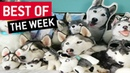 Best Of The Week June Week 2 2018 JukinVideo