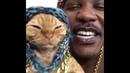 In my feelings Cat Rap Challenge - iAmMoshow Dj Ravioli