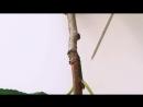Разнообразие побегов яблоня вишня ель Морфология растений 4