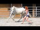 Лошадь будет оставаться с тобой на свободе только если ты хороший лидер Динамика с Хенти