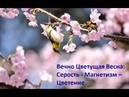 Активация 21.06 - Вечно цветущая весна
