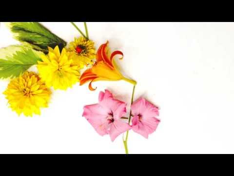 Цветочные истории | Летний лагерь | Сквирел | МультСтудия Академия Волшебников, т 89080252490 HD H
