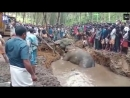 Villagers rush to help a huge elephant stuck in a muddy pit.mp4