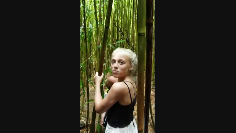 бамбуковые лес