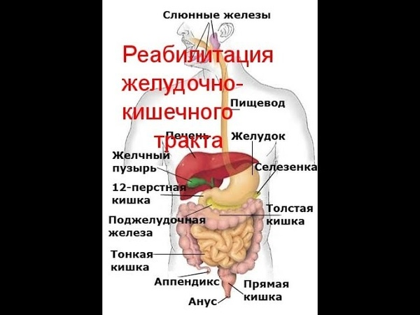 Реабилитация желудочно кишечного тракта.