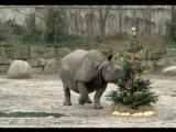 Красных панд и носорогов кормят елками