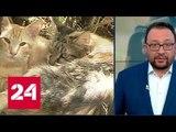 Зоозащитнику грозит реальный срок за спасение замурованных кошек - Россия 24
