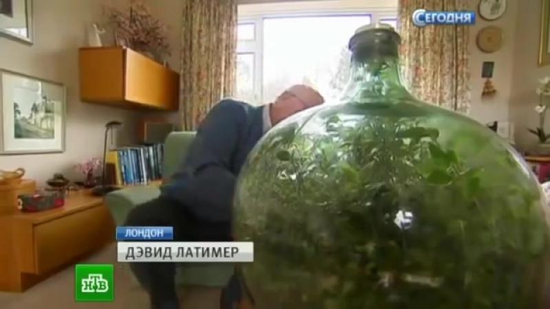 Сад в бутылке - замкнутой экосистеме с растением более 40 лет