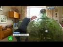 Сад в бутылке замкнутой экосистеме с растением более 40 лет