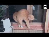 Коты разбойники 17 эп. Кошки Мышки. Лучшие приколы декабрь 2016