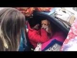 Une Italienne de 56 ans survit dans sa voiture depuis octobre Les services sociaux nont rien fait.