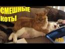 смешное видео про котов и кошек