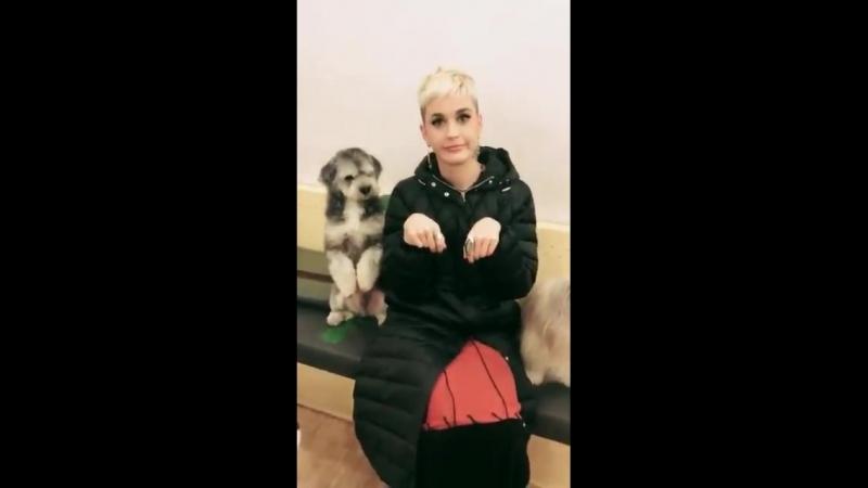 Katy at the Bau House Dog Cafe in Seoul