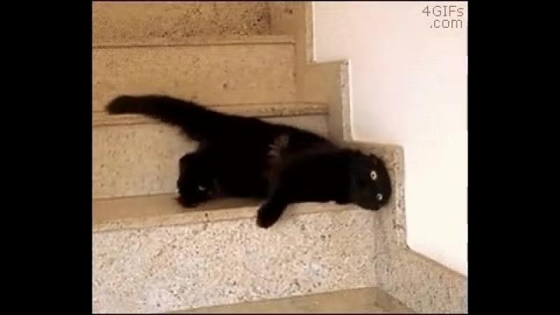 котик катится по лестнице