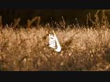 Fear Of God x Nike Air Campaign Film