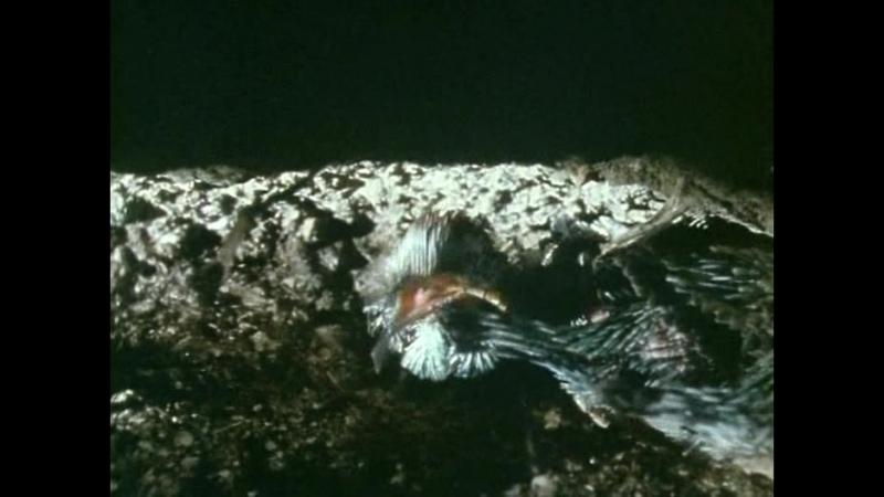 BBC.Pervyj.raj.(1.serija.iz.4).Sozdanie.sada.1987.XviD.DVDRip-Kinozal.TV