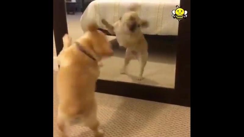 Пёс Зажигательно танцует.
