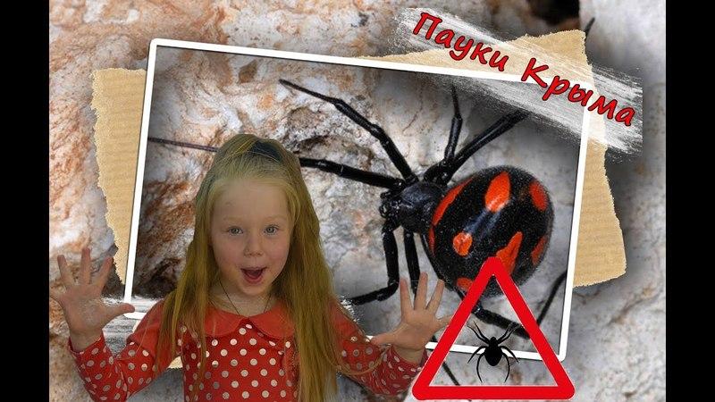 Ядовитые пауки Крыма