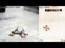 Робот таракан ходит по воде