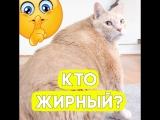 Этот котик весит 15 кг!