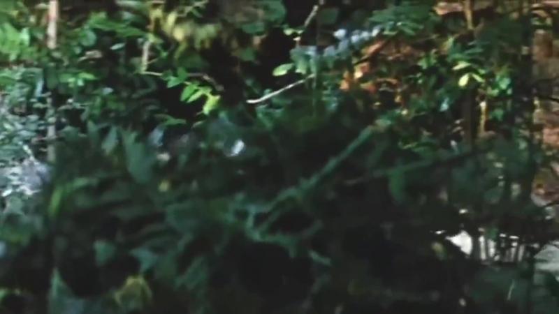 «Жизнь и удивительные приключения Робинзона Крузо» (1972) - приключения, реж. Станислав Говорухин