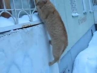 Кот-романтик_).mp4