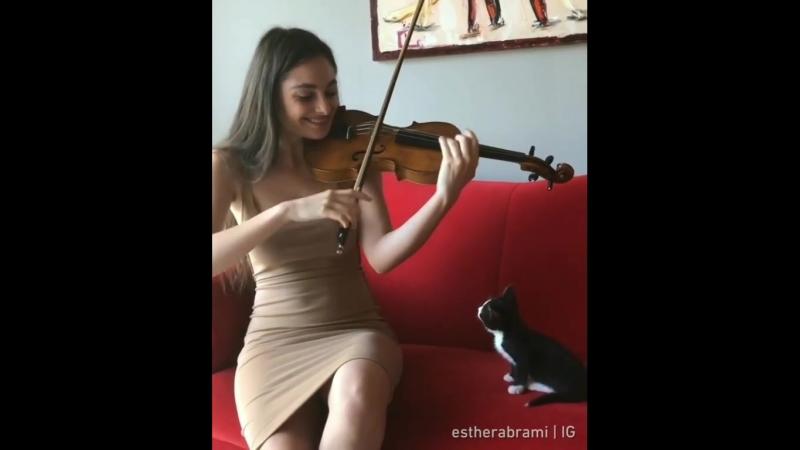 Концерт для котят