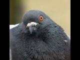 Наташа голуб