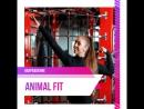 Animal Fit