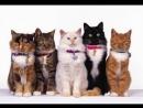 Мимишный ролик с котиками
