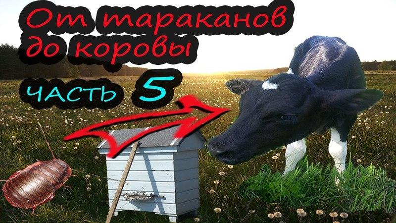 От тараканов до коровы Часть 5 Пчелки Жизнь в деревне
