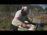 весенние работы и сбор пыльцы