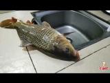 ДЕВЯТАЯ СЕСТРА - САМАЯ УМНАЯ! Ловись рыбка большая и очень большая! Жареный Карп под соусом ''Ли У''.